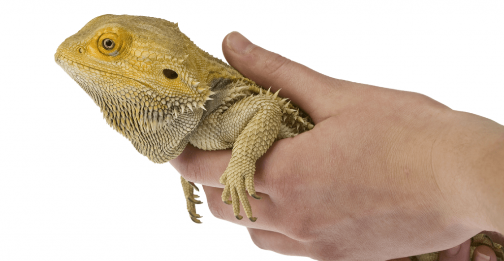 Intro_Reptile_Care